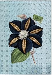 VE Gärten der Künstler Winterträume Klappkarte - Motiv Star of India 5 Ex.