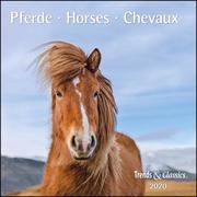 Pferde Horses 2020 - Broschürenkalender - Wandkalender - mit herausnehmbarem Poster - Format 30 x 30 cm