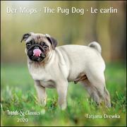 Der Mops The Pug Dog 2020 - Broschürenkalender - Wandkalender - mit herausnehmbarem Poster - Format 30 x 30 cm