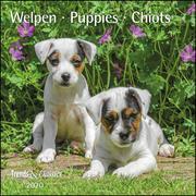 Welpen Puppies 2020 - Broschürenkalender - Wandkalender - mit herausnehmbarem Poster - Format 30 x 30 cm