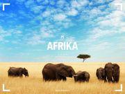 Afrika - Ackermann Gallery 2020