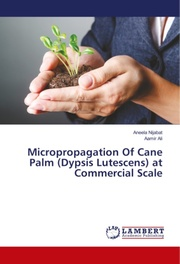 Micropropagation Of Cane Palm (Dypsis Lutescens) at Commercial Scale