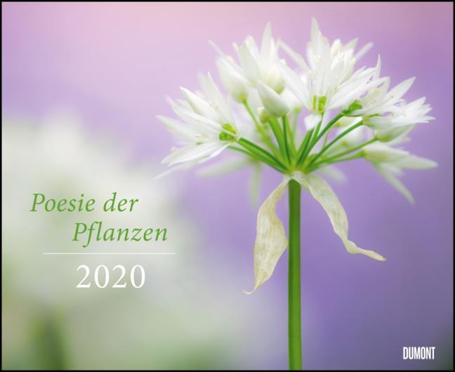 Poesie Der Pflanzen 2020 Dumont Garten Kalender Querformat 52 X