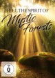 Feel the Spirit of Mystic Forests