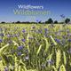 Wildblumen 2019