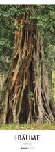 Bäume 2021 - Streifenkalender XXL 25x69 cm - Trees - Landschaftskalender - Natur - Bild-Kalender - Wand-Kalender - Alpha Edition