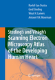 Viragh's and Steding's Scanning Electron Microscopy Atlas of the Developing Human Heart