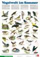 Vogelwelt im Sommer