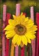 Sonnenblume 2018