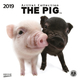 The Pig 2019