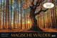 Magische Wälder 2022