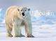 Eisbären 2022