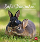 Süße Kaninchen Postkartenkalender 2021