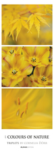 Colours of Nature - Triplets 2019 - Streifenkalender