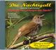 Die Nachtigall - Luscinia megarhynchos