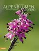 Alpenblumen 2020